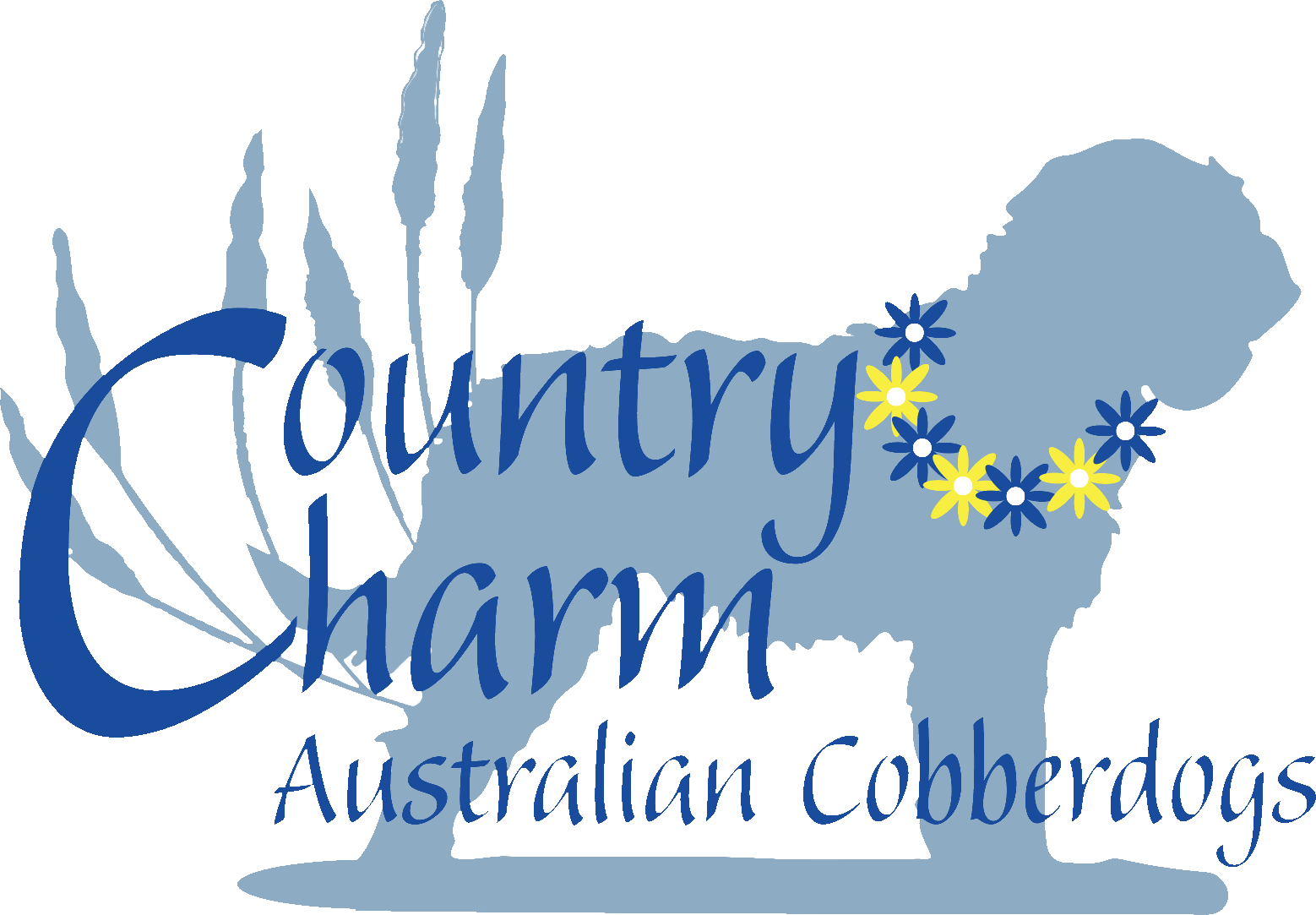 Best Australian Cobberdogs For Sale | Country Charm | Missouri